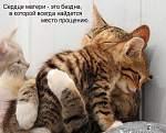 etu bezumnuiu lubov k kotam mne privil moi muj,a shas mi vdvoem obojaem kotikov:)