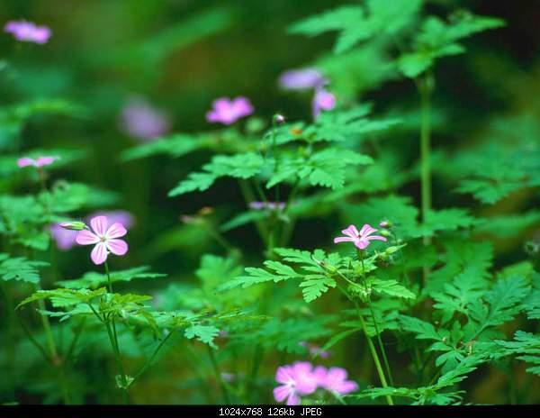 For JESUS Bible citations Цитаты из библии Մեջբերումներ Աստվածաշնչից-forest-flowers.jpg