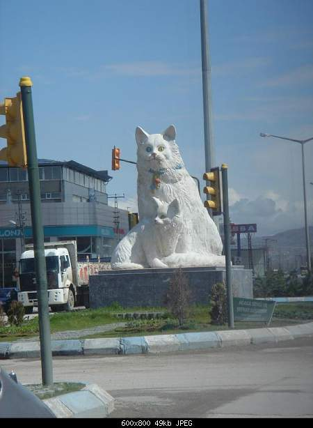 Ванская кошка,Vans cat,Վանակատու-376375220kyvhzr_ph.jpg