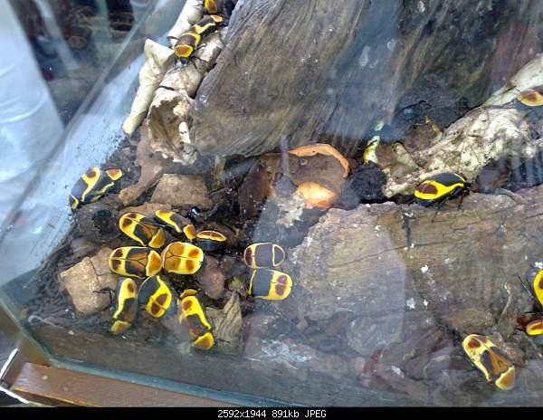 Увлекательный выезд в зоопарк :)-220720092809.jpg