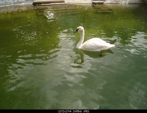 Увлекательный выезд в зоопарк :)-p7224784.jpg