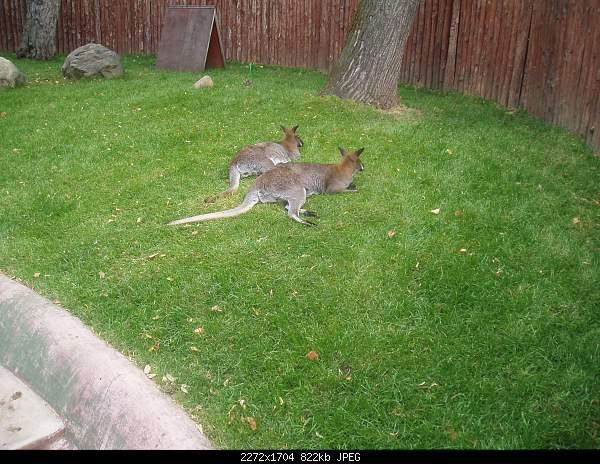 Увлекательный выезд в зоопарк :)-p7224785.jpg