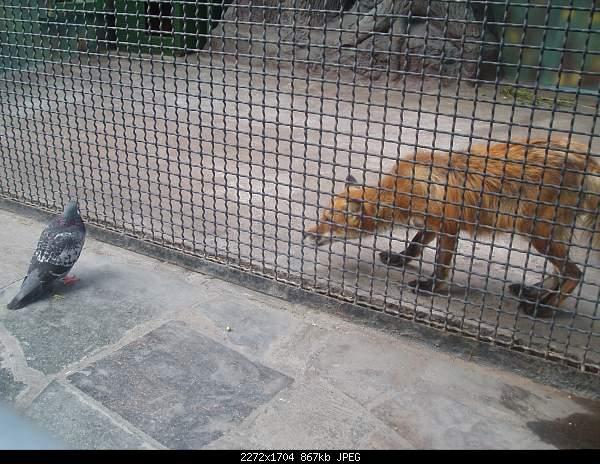 Увлекательный выезд в зоопарк :)-p7224797.jpg