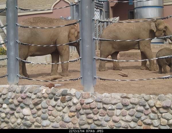Увлекательный выезд в зоопарк :)-p7224799.jpg