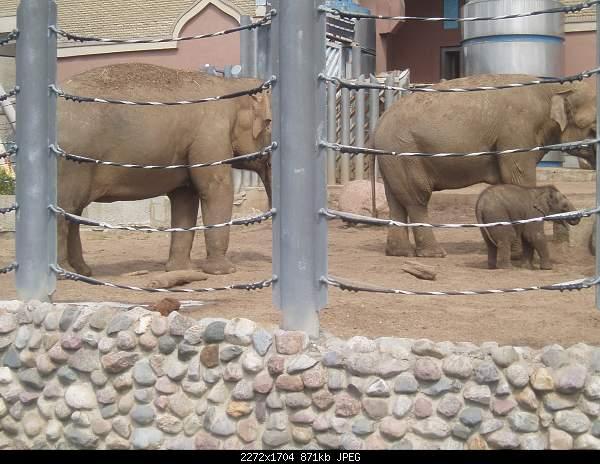 Увлекательный выезд в зоопарк :)-p7224800.jpg
