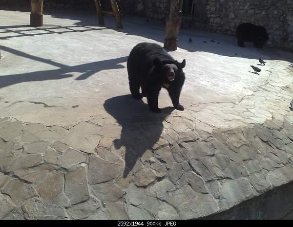 Увлекательный выезд в зоопарк :)-220720092719.jpg
