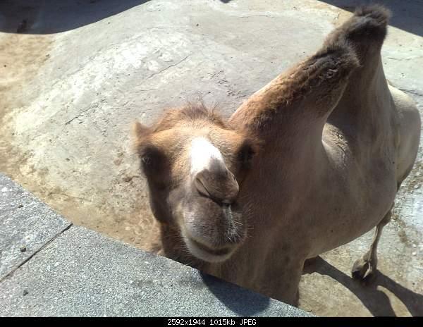 Увлекательный выезд в зоопарк :)-220720092747.jpg
