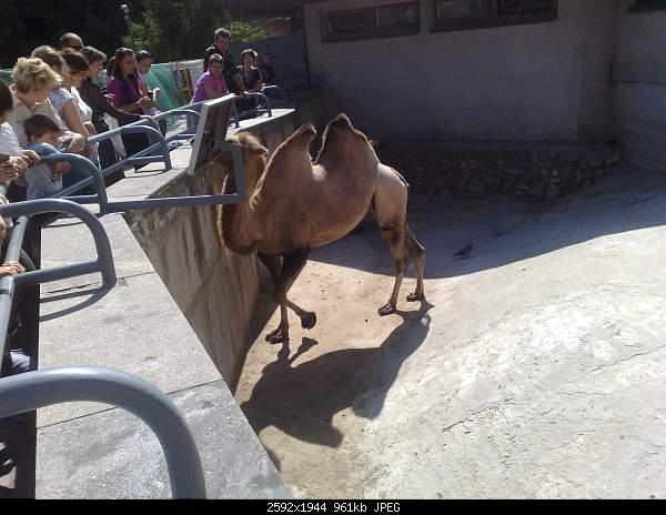 Увлекательный выезд в зоопарк :)-220720092748.jpg