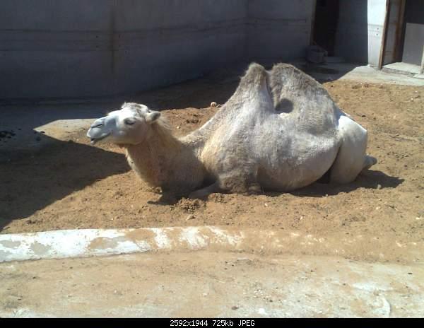 Увлекательный выезд в зоопарк :)-220720092753.jpg