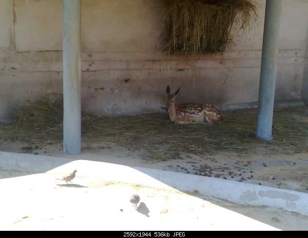 Увлекательный выезд в зоопарк :)-220720092754.jpg