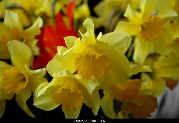 Девушки и цветы-dsc_0978w.jpg