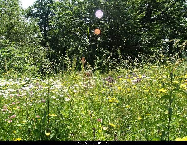 Девушки и цветы-p7192949.jpg