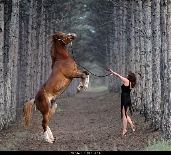 Лошади. Красота и грациозность-_11.jpg