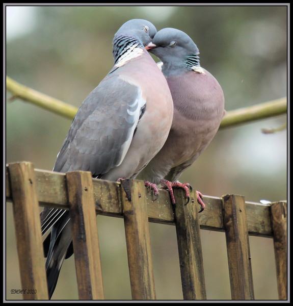 love.jpg (91.9 KB, )