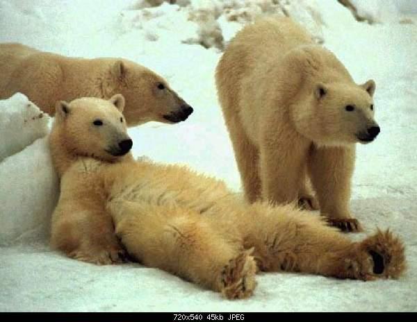 Танец медведя-f11-eisb-c3-a4ren05.jpg