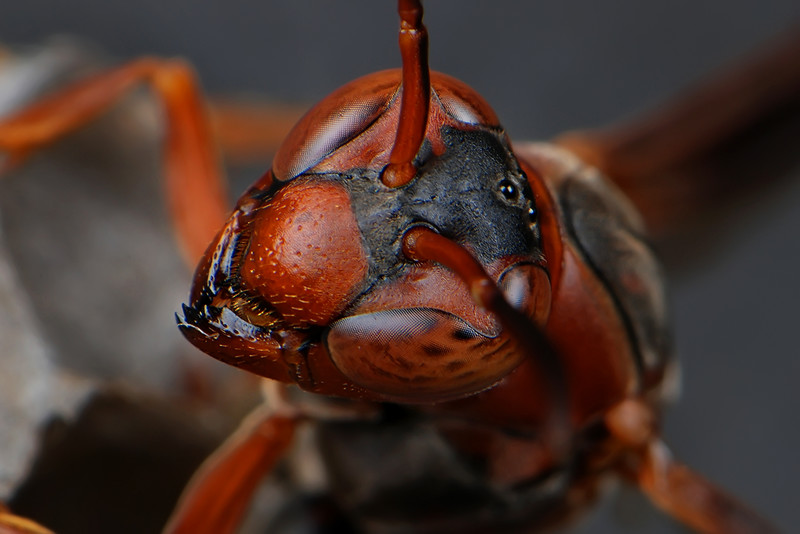 Wasp.jpg (85.9 KB, )