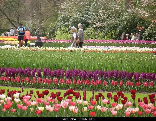 Цветочный парк Keukenhof Holland-sdc10576.jpg