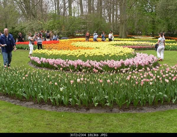 Цветочный парк Keukenhof Holland-sdc10592.jpg