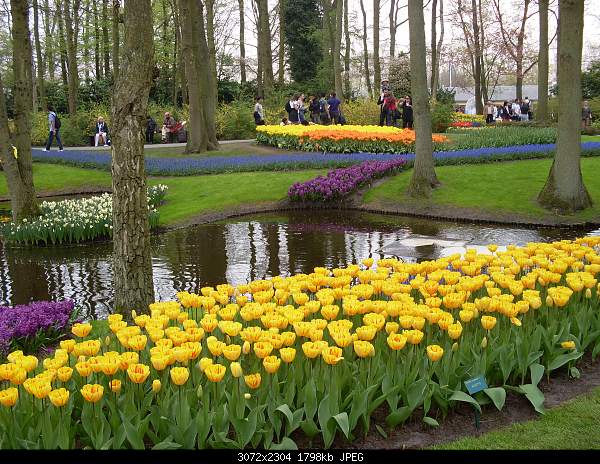 Цветочный парк Keukenhof Holland-sdc10635.jpg