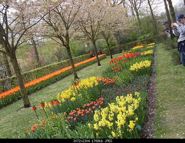 Цветочный парк Keukenhof Holland-sdc10718.jpg