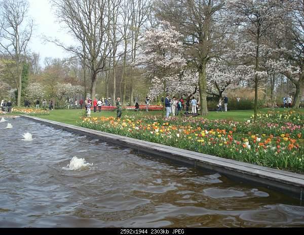 Цветочный парк Keukenhof Holland-dsc08002.jpg