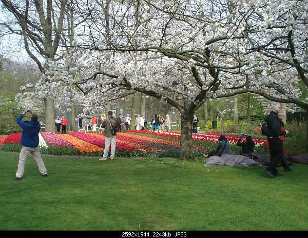 Цветочный парк Keukenhof Holland-dsc08006.jpg