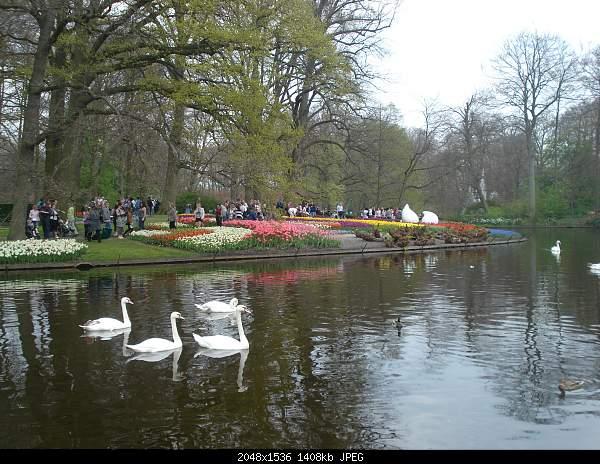 Цветочный парк Keukenhof Holland-dsc08115.jpg