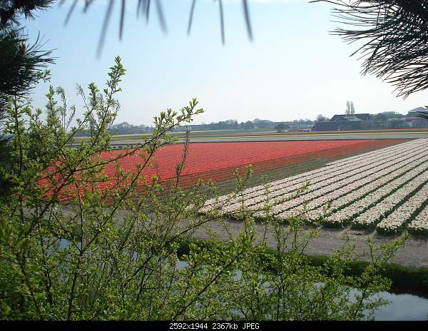 Цветочный парк Keukenhof Holland-dsc07990.jpg