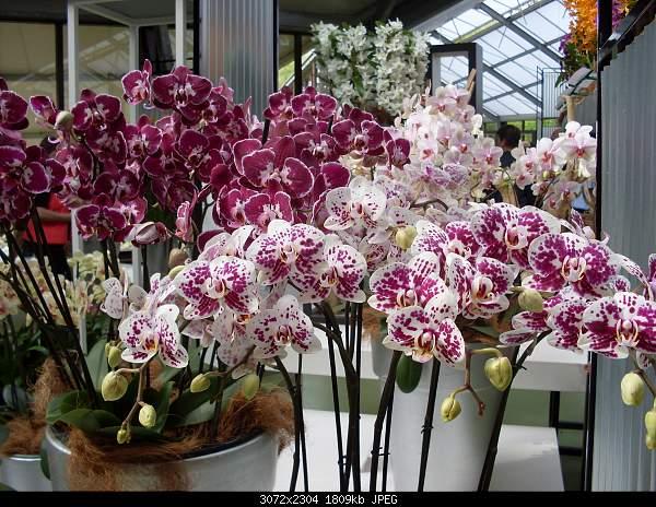 Цветочный парк Keukenhof Holland-sdc10513.jpg