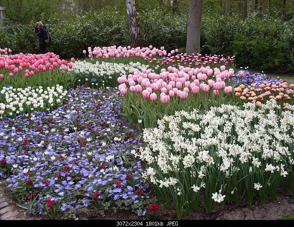 Цветочный парк Keukenhof Holland-sdc10752.jpg