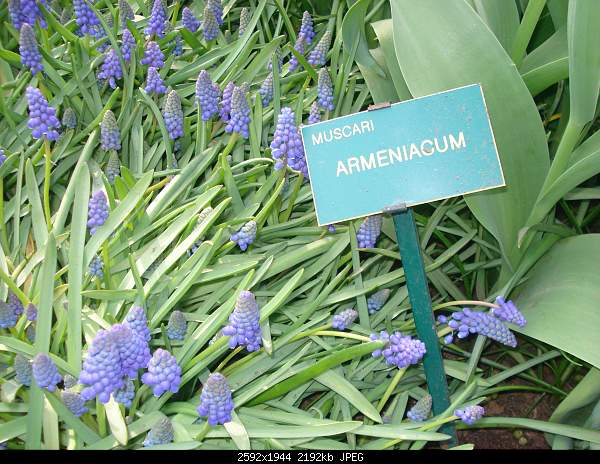Цветочный парк Keukenhof Holland-dsc07951.jpg