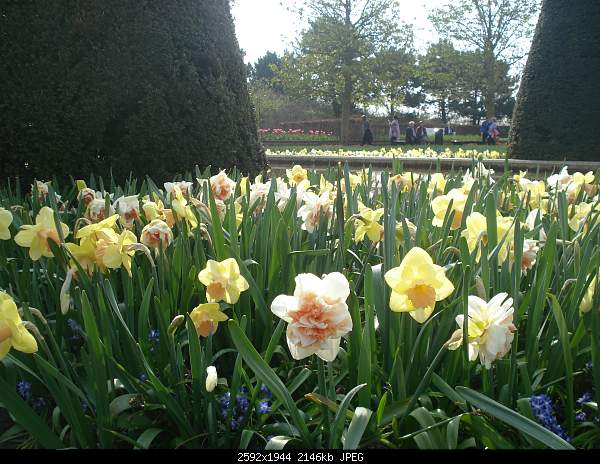 Цветочный парк Keukenhof Holland-dsc07980.jpg