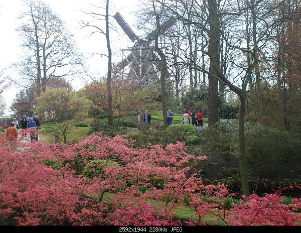 Цветочный парк Keukenhof Holland-dsc08033.jpg