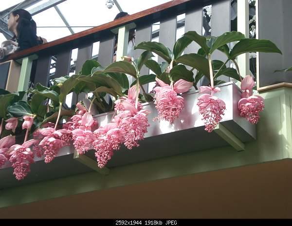 Цветочный парк Keukenhof Holland-dsc08045.jpg