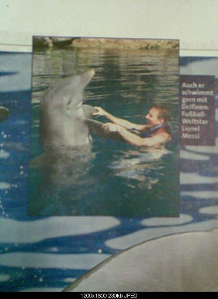 Дельфины в опасности...-bild004.jpg