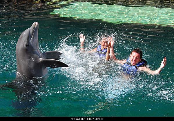 Дельфины в опасности...-4857176494_85dedf0a61_b.jpg
