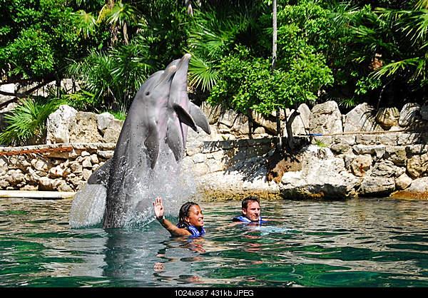 Дельфины в опасности...-4857176762_006361e36f_b.jpg