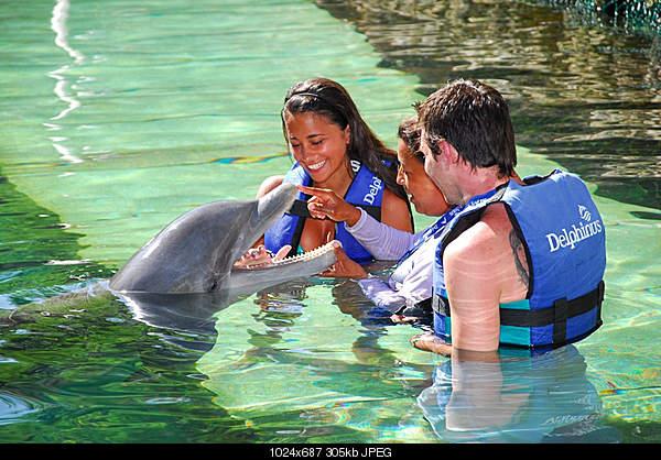Дельфины в опасности...-4857176098_ba61148945_b.jpg