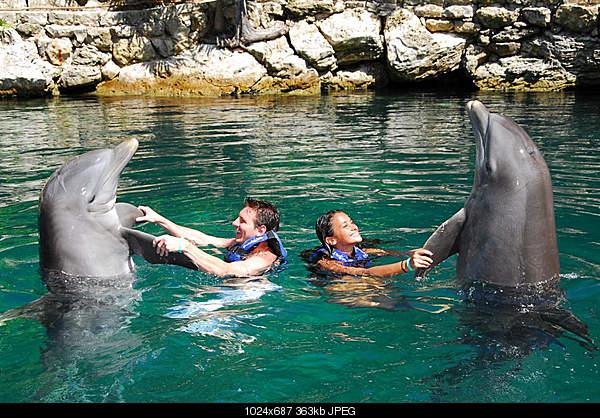 Дельфины в опасности...-4856557861_4123ee09a2_b.jpg
