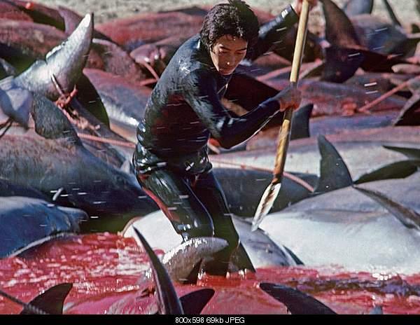Дельфины в опасности...-delfine2_19202312originallarge-4-3-800-0-1138-3445-3716.jpg