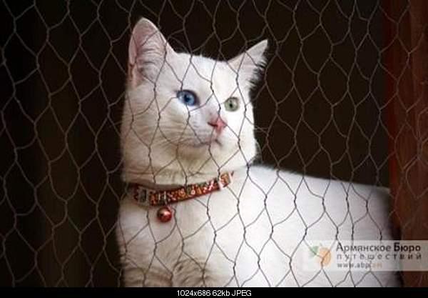 Ванская кошка,Vans cat,Վանակատու-b4e350cfd2b64b7790548aa93b6b8d7a.jpg
