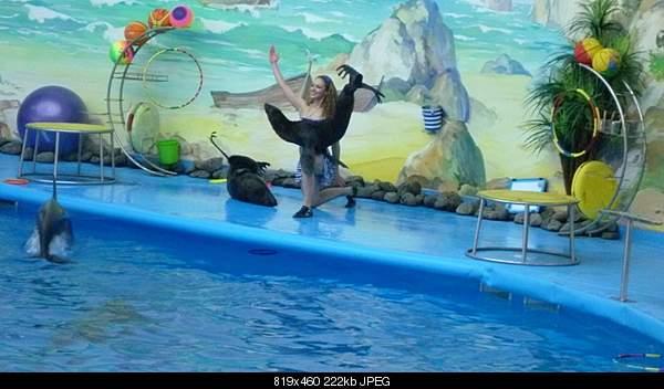 Дельфины в опасности...-1293541086_izobrazhenie-555000v-114_resize.jpg