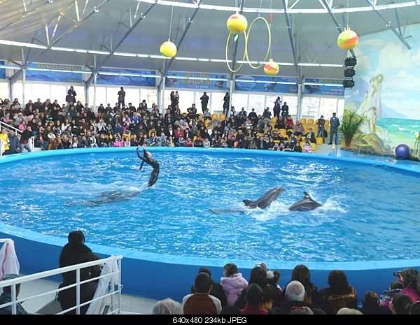 Дельфины в опасности...-1293541069_izobrazhenie-5550b00-198.jpg