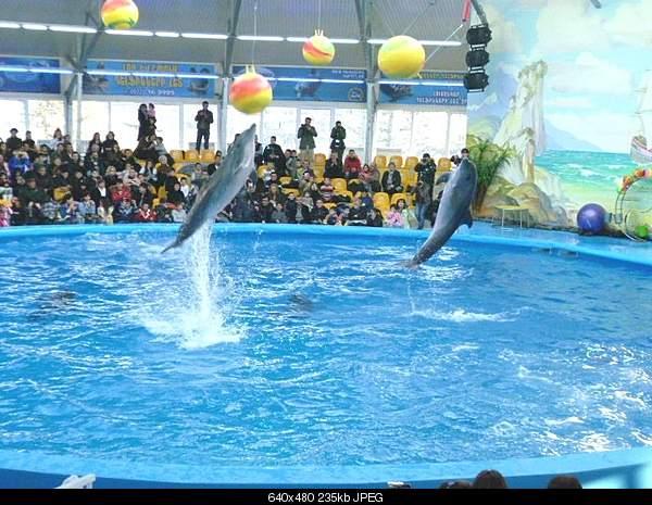 Дельфины в опасности...-1293541047_izobrazhenie-555b000-159.jpg