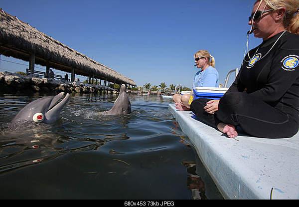 Дельфины в опасности...-150868.jpeg