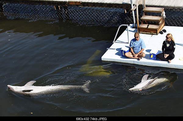 Дельфины в опасности...-150869.jpeg