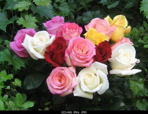 8 МАРТА:))-002_rose.jpg