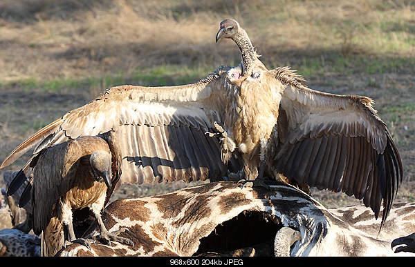 Удивительный животный мир-11008883.jpg