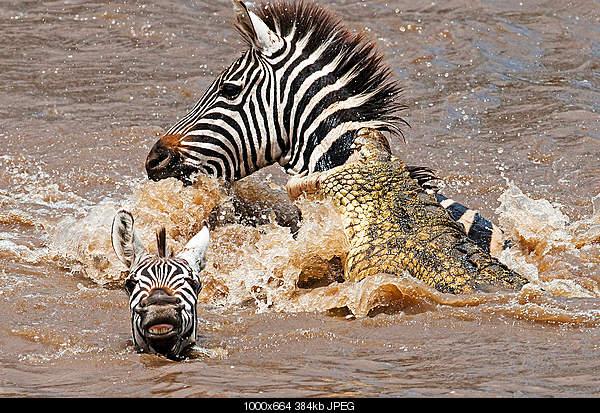 Удивительный животный мир-18785595.jpg