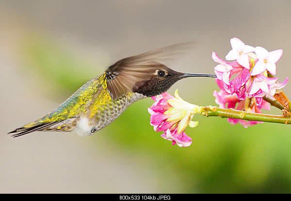 Удивительный животный мир-bird.jpg